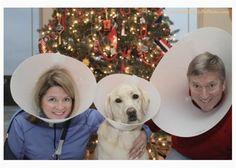 Yep, they went there...Photo: Courtesy of Awkward Family Pet Photos via Vetstreet