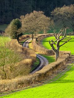 The winding country lane, Oxfordshire, England (by TonyKRO).