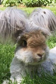Wally The Angora Bunny Is Your Ultimate Summer Hairspiration