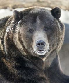 Bears, eagles, seals: How endangered animals fare