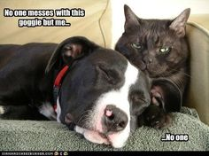 Cute Pitbull Pictures with Captions   ... pitbull - Page 42 - Loldogs n Cute Puppies - funny dog pictures