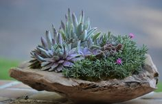 Succulents in a wooden bowl. design/photo: The Succulent Perch