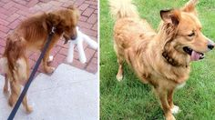 15 Weight Transformations Of Rescued Dogs That Will Leave You With Happy Tears