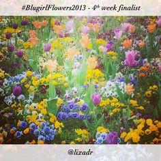 #BlugirlFlowers2013 Instagram Photo Contest finalist @lixadr