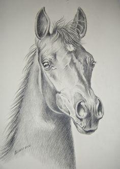 510 Melhores Imagens De Cavalo Desenho Cavalo Desenho Cavalos