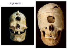 Real Cyclops Skull - Bing Images