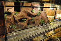 Terrarium met 3D Rots achterwand (Bruin)