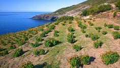 Pantelleria,+un+modello+di+aridocoltura+salva-acqua
