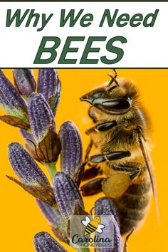Would our lives really be different without them? Types Of Bees, Types Of Insects, Honey Bee Hives, Honey Bees, Bee Facts, Modern Agriculture, Benefits Of Gardening, Bee Do, Backyard Beekeeping