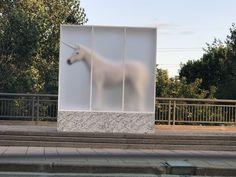 Real unicorn 🦄