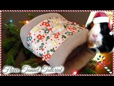 (240) How to make a guinea pig tunnel | BasicallyPets - YouTube