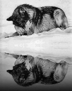 Wolf (Totem and Spirit Animal) Wolf Spirit, Spirit Animal, Wolf Pictures, Animal Pictures, Beautiful Creatures, Animals Beautiful, Tier Wolf, Animals And Pets, Cute Animals