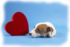 Remember your pets on Valentine's Day.