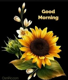 In today's post, we are presenting for you Amazing Good Morning Images With Beautiful Flowers. You will definitely like this great collection of good morning images of today. Good Morning Images, Good Night Love Images, Good Morning Flowers, Good Morning Messages, Good Morning Greetings, Good Morning Good Night, Good Night I Love You, Good Day To You, Good Night Wishes