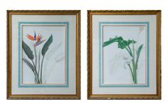 """Beautiful Pair of elegant floral prints from the 1930s. CIRCA DATA: 1930s DIMENSIONS: 33"""" h x 27"""" w PRICE: $2,200"""