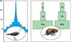 Биология в лицее: Демографическая структура популяций Blog Page
