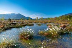 <p>Genießen+Sie+die+herrliche+Pflanzen-+und+Tierwelt+dieser+einmaligen+Landschaft+(Naturschutzgebiet+Kendlmühlfilzen).</p> Mountains, Nature, Travel, Nature Reserve, Waterfall, Tourism, Naturaleza, Viajes, Destinations