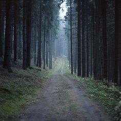 beautiful. trail run inspiration