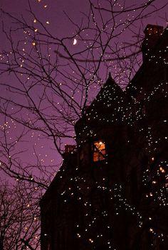 Purple Sky And Tree Lights halloween halloween pictures halloween images halloween ideas Fall Halloween, Happy Halloween, Halloween Night, Vintage Halloween, Purple Halloween, Halloween House, Halloween Fairy, Halloween Clothes, Spooky House