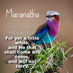 HOW LONG AND HOW SOON❗ ☝️Hebrews 10:37 (KJV) For yet a little while, and He that shall come will come, and will not tarry. #MARANATHA 🔥🔥🔥 Revelation 22 17, Hebrews 10, Water Life, Let It Be, Sayings, Quotes, Quotations, Lyrics, Quote