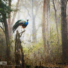 Serenity by skarun1. Please Like http://fb.me/go4photos and Follow @go4fotos Thank You. :-)