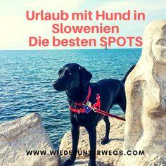 Wir waren mit Hund Coffee auf Urlaub in Slowenien - die besten 10 Tipps für Reisen mit Hund. Europe Travel Guide, Travel Destinations, Labrador Retriever, Camping, Road Trip, To Go, Adventure, City, Nature