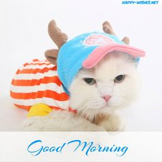 sweet cat Good Morning Wishes For Cat Lovers image Good Morning Cat, Good Morning Wishes, Lovers Images, Happy Wishes, Small Cat, Cat Lovers, Kittens, Cute Animals, Crochet Hats