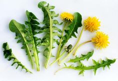 9 Recipes that Use Dandelion Greens and Flowers. You can use dandelions in many different ways: as salad greens, in wine and jelly, and cooked with spices. Here are nine tasty dandelion recipes.