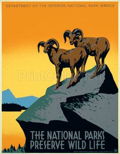 PrintCollection - The National Parks Preserve Wild Life