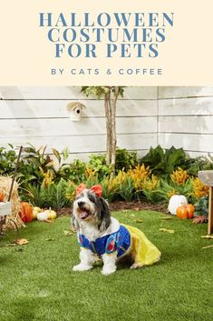 Halloween costumes can be so much fun, whether it is for kids, adults, or even pets. Chewy has a ton of great costume options for pets this year, and I've been really impressed by most of the prices. Check out the best Halloween costumes for pets from Chewy here!