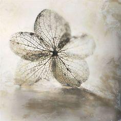 """Petal Veins"" by Shoshannah White"