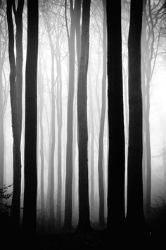 There is a sense of mystery in this picture that embraces the transcendentalist forest. It embraces a quality of wisdom and discover.