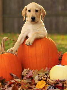SEASONAL – AUTUMN – a country autumn includes lots of pumpkins to harvest in a plethora of different shapes, sizes, and colors of autumn.