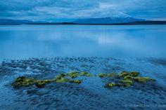 Green moss on the beach. Osar, Iceland