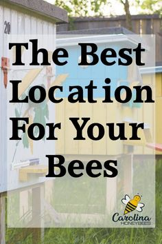 How to find the best location for your beehive? Hive placement plays an important role in the health of your bee colony. These tips will help you find the best spot. Bee Hive Plans, Beekeeping For Beginners, Beekeeping Equipment, Beekeeping Supplies, Raising Bees, Bee Boxes, Bee Farm, Backyard Beekeeping, Bee Friendly