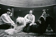 BEATLES + BIG SHAGGY DOG!