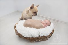 Baby and Dog <3  Newborn Photography by Sabine Périard Photography    Newborn Baby Boy and French Bulldog Newborn Photo Ideas Dog  #newborn #newbornphotos #newbornphotography #babyboy #frenchbulldog #frenchie #frenchbully  www.sabineperiardphotography.com