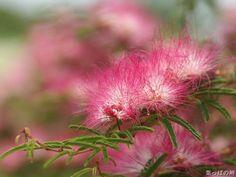 Beautiful Exotic Nature Flowers - Part 2 (20 images) - ImageBlogs.org | Wonderful Image Island |ImageBlogs.org | Wonderful Image Island