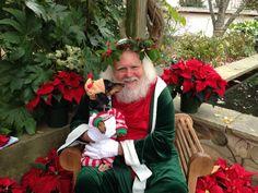 Please, Santa... take me off the naughty list. Please?!? - photo via Jennifer Lehr --> I love Dachshunds fb page