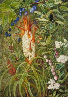 Berry-Bearing Tasmanian Shrubs by Marianne North early 1880s