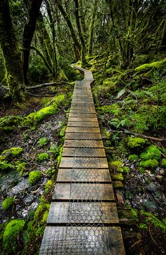 Enchanted Forest, Tasmania, Australia