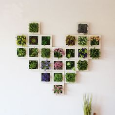 Succulent Wall Hanger Frame Our Succulent Wall Hanger Frames are beautiful as a single item display or you can Mix and Match these faux succulent frames in a myriad of combinations to add awe-inspiring wonder to any wall! Artificial Plant Wall, Artificial Flowers, Decorating With Sticks, Succulent Frame, Succulent Plants, Succulent Display, Hanging Plant Wall, Plant Wall Decor, House Plants Decor