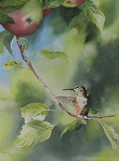 Morning Stretches  (Rufous Hummingbird) by Kimberly Wurster Watercolor ~ 20 x 16