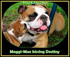 Maggi-Mae LoVes her Big Sister, Destiny <3    I took this pic on the Bonny Bulldogz' Farm almost 2 yrs ago. <3 <3 <3 <3 <3