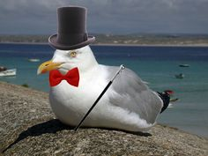 Like-a-sir seagull by Eecha1.deviantart.com on @deviantART
