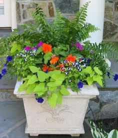Beautiful colors in this planter. The Boston fern is a nice filler too.