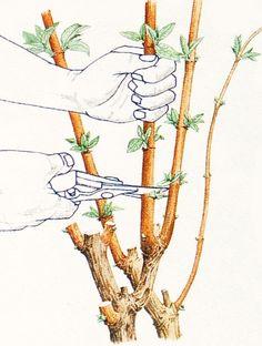 Hydrangea, Gardening Tips, Cross Stitch, Home And Garden, Flowers, Garden, Vegetable Garden, Tree Structure, Lawn And Garden