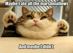 Funny animals, funny pics, hilariousness, funny jokes, jokes funny, humor cats, hilarious cats …For more humorous quotes and funny pictures visit www.bestfunnyjokes4u.com