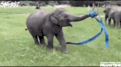 Funny pictures about This Elephant Is So Happy. Oh, and cool pics about This Elephant Is So Happy. Also, This Elephant Is So Happy photos. Elephant Gif, Happy Elephant, Elephant Love, Animals And Pets, Baby Animals, Funny Animals, Cute Animals, Elephants Playing, Save The Elephants