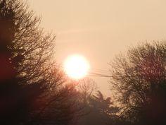 sunrise photography with bird